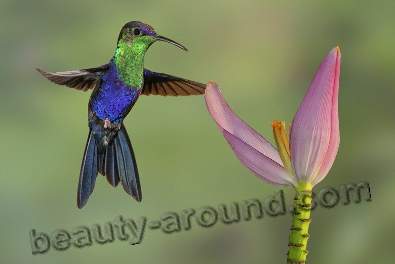 Колибри фото красивых птиц