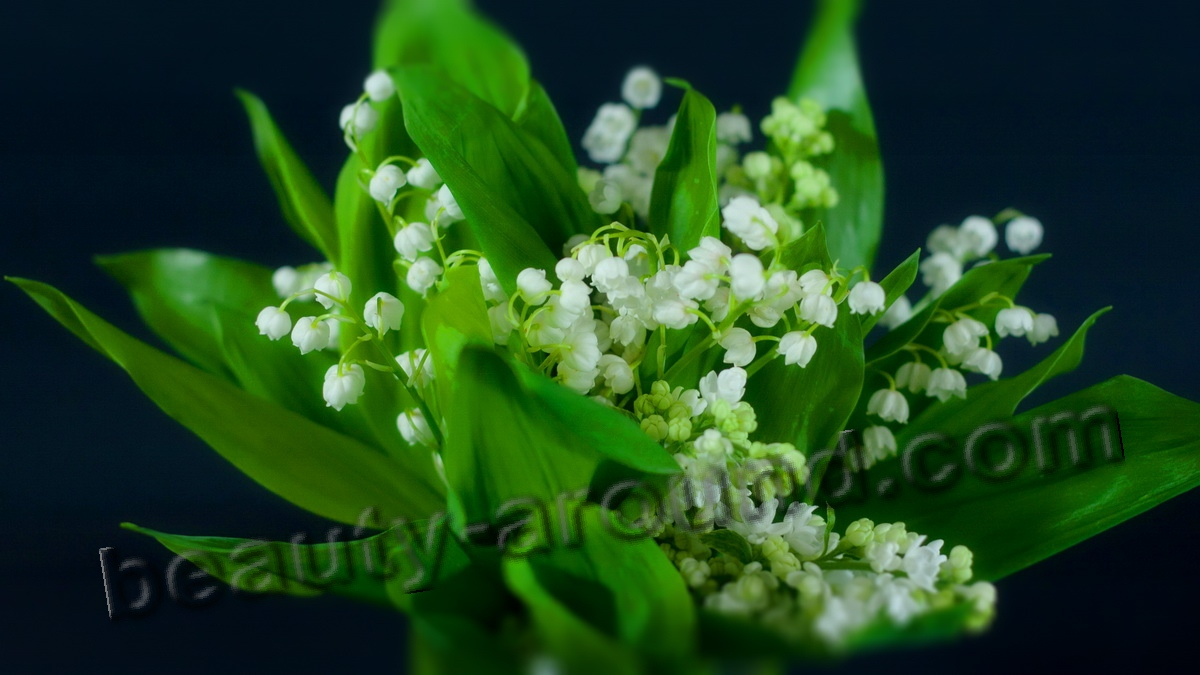 The most beautiful flowers in the world top 10 lily of the valley pic izmirmasajfo