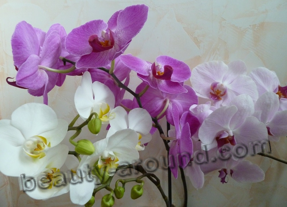Orchid beautiful flower picture