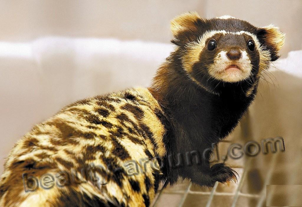 Фото животного из зоопарка