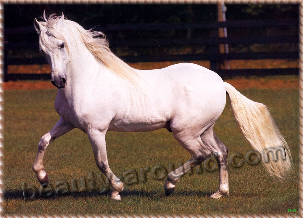 Paso Fino most beautiful horse breeds photos