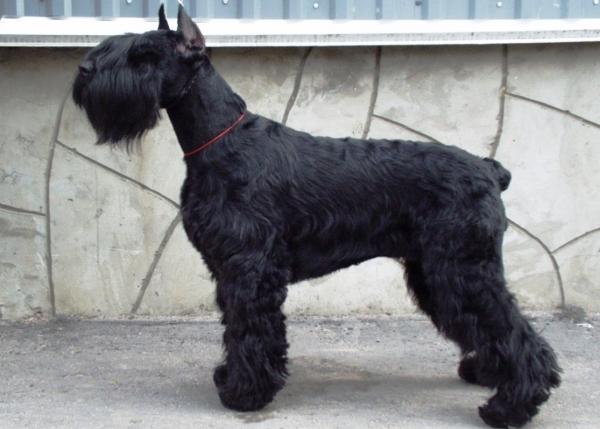 крупные собаки породы фото