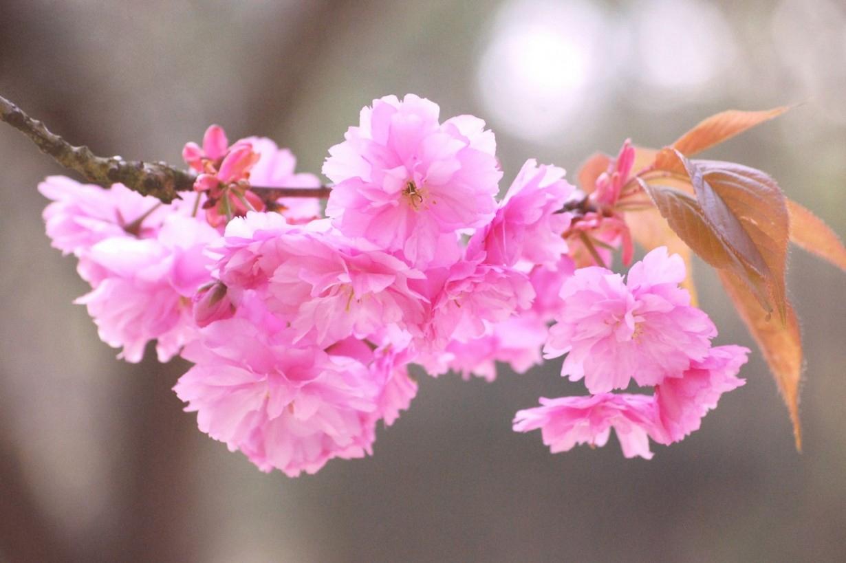 Top 10 Prettiest Flowers in the World
