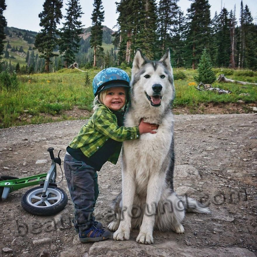 Волкособ с ребёнком фото