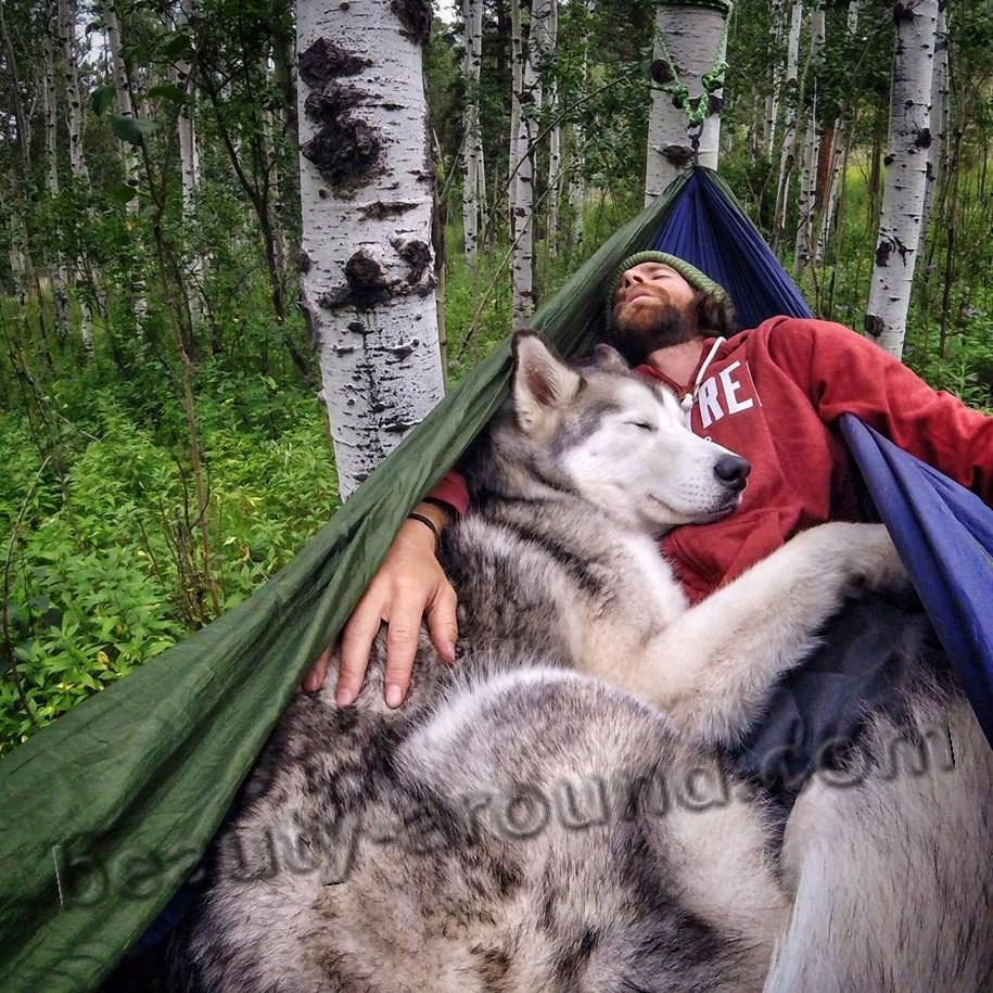 Локи самый известный волкособ фото
