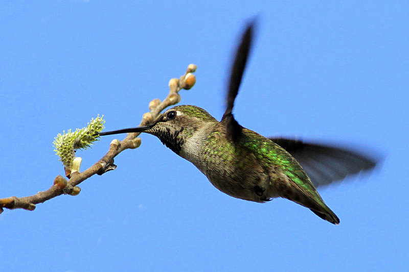 beautiful humming birds with photos
