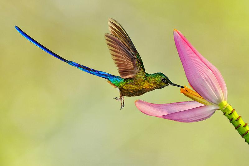 вышивка колибри в полете
