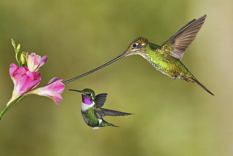 скачать колибри торрент - фото 9