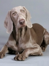 Hunting Dog Breeds, Photos