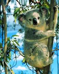 Top-14 Most Beautiful Australian Animals. Photo Gallery
