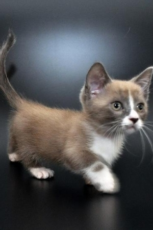 The best smallest cat breed