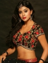 Top-17 Beautiful South Indian Actresses. Photo Gallery